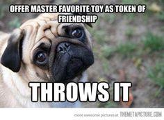 Owner threw Pug's token of friendship! ;-P