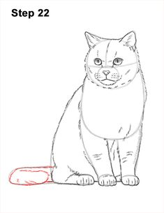 Learn how to draw a British Shorthair Cat with this how-to video and step-by-step drawing instructions. New drawing tutorials published every week!