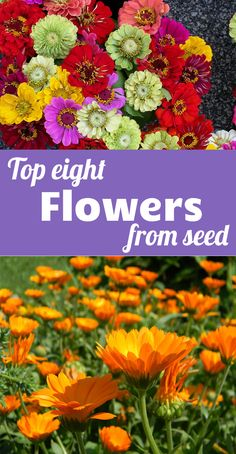 Top eight flowers from seed - easy flowers that will add a tonne of color to your garden! Top eight flowers from seed - easy flowers that will add a tonne of color to your garden! Starting Flowers From Seeds, Easiest Flowers To Grow, Starting Seeds Indoors, Growing Flowers, Planting Flowers, Seed Starting, Planting Seeds Outdoors, Growing Sunflowers From Seed, Zinnia Garden