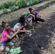 Flower Farms Help Kids Learn About Business, Nature While Building Up South Side Neighborhoods Aquaponics Greenhouse, Aquaponics Fish, Aquaponics System, Grow Tower, Cash Crop, Urban Agriculture, Flower Farm, Growing Flowers, Growing Vegetables