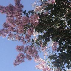 Nature nature nature, natu… – A Women My Flower, Pretty In Pink, Beautiful Flowers, Cactus Flower, Exotic Flowers, Purple Flowers, Flower Aesthetic, Pink Aesthetic, No Rain