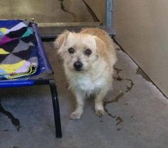 #A476516 Release date 12/16 I am a male, tan Terrier mix. Shelter staff think I am about 3 years old. I have been at the shelter since Dec 05, 2014. City of San Bernardino Animal Control-Shelter. https://www.facebook.com/photo.php?fbid=10204082387677545&set=a.10203202186593068&type=3&theater