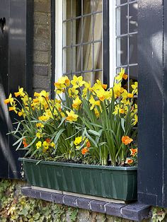 Window Box Plantings
