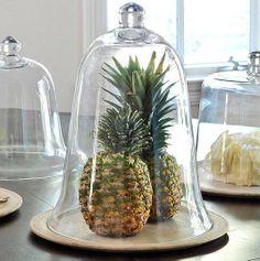 Cam Çan Kavanoz, Cloche, Glass Bell Jar