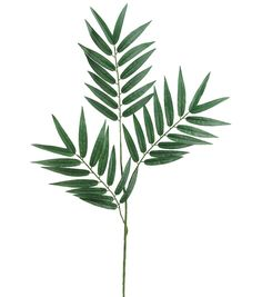 28' Phoenix Palm Branch x3 w/39 Leaves -- More info could be found at the image url.