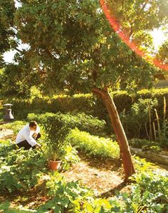 Experience the extraordinary in California: embark on a local culinary adventure in the heart of farming country.