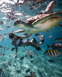 Scuba diving in Ranguana Caye, Belize Belize Island Travel Destinations Honeymoon Backpack Vacation Underwater Photography, Travel Photography, Nature Photography, Arquitectura Wallpaper, Places To Travel, Places To Go, Travel Destinations, Travel Aesthetic, Adventure Is Out There