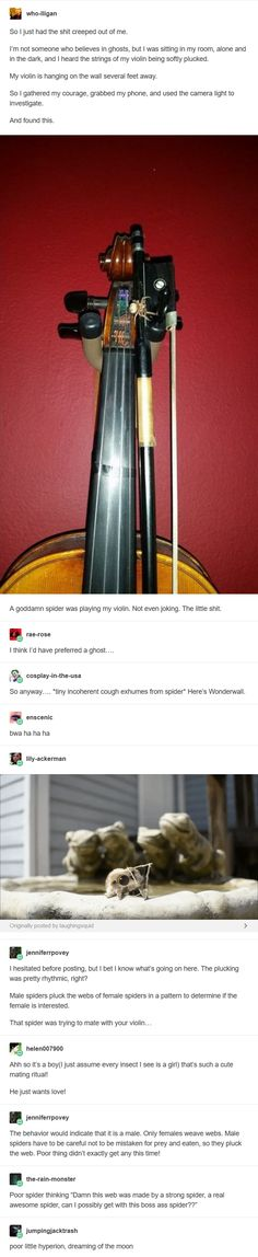 memes - String instrument - who-ligan So I just had the shit creeped out of me.,Funny, Funny Categories Fuunyy memes - String instrument - who-ligan So I just had the shit creeped out of me. I& not someone who believes in ghosts, bu. Tumblr Posts, Tumblr Stuff, Funny Memes Tumblr, Funny Quotes, Creeped Out, Sassy, The Funny, Funny Animals, Fun Facts