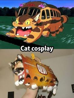 Funny pictures about My Neighbor Totoro Cosplay. Oh, and cool pics about My Neighbor Totoro Cosplay. Also, My Neighbor Totoro Cosplay photos. Anime Meme, Cute Funny Animals, Funny Cute, Chat Bus, Tierischer Humor, Animal Pictures, Funny Pictures, Best Cosplay Ever, My Neighbor Totoro