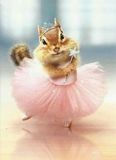 Details about Chipmunk Ballerina Funny Birthday Card – Greeting Card by Avanti Press Cute Baby Animals, Animals And Pets, Funny Animals, Funny Animal Pictures, Cute Pictures, Seriously Funny, Funny Birthday Cards, Happy Birthday Animals Funny, Funny Cards