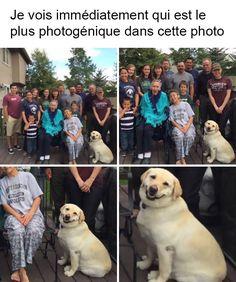 20 photos de chiens avec des sous-titres bien huilés #2