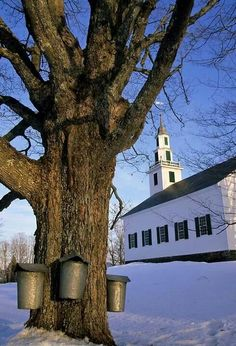 Sap buckets hang from an old sugar maple at the East Montpelier meeting house in Vermont. I had my girlscout meetings in that old meeting house :) New Hampshire, Rhode Island, Country Life, Country Living, Connecticut, Massachusetts, New England States, Maine, Mountain States