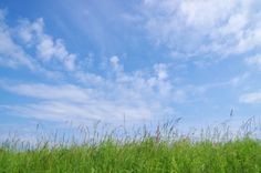 Summer day Art Print A wonderful cloudy and blue sky over a beautiful meadow.  Nature, fauna, landscape, grass, green, meadow, flowers, clouds, blue, white, rural