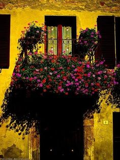 Flowers & balcony