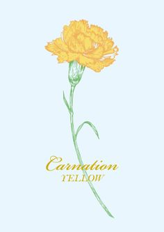 Yellow Carnation by JUNG SOO CHAE, via Behance