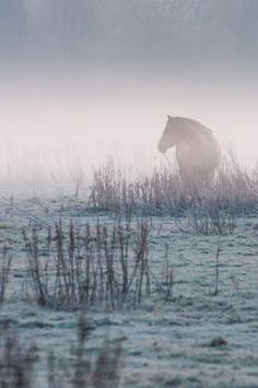 "Horse: ""In The Morning Mist."" (Photo By: Stefan Staal.)"