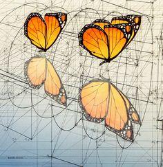 Galería de Rafael Araujo fusiona el arte y la ciencia ilustrando a mano la Proporción Áurea - 3