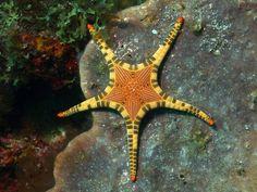 INature · Amazing starfish!!