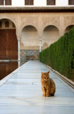 Cat at Alhambra by Ben Yacobi - my inner ear adds the music...