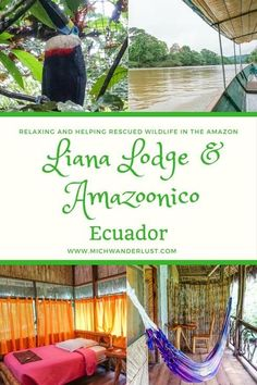 A great way to explore the Amazon: Liana Lodge and the animal rescue centre Amazoonico are wonderful examples of sustainable and responsible tourism | Rainforest | #Ecuador | #Amazon | #Travel | MichWanderlust Ecuador, South America Destinations, South America Travel, Travel Guides, Travel Tips, Travel Information, Culture Travel, Central America, Solo Travel
