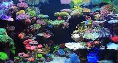 Image result for reef tank aquascaping