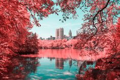 Paolo Pettigiani - INFRARED NYC_A series of infrared / aerochrome photos to show Central Park from a different perspective.