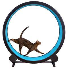 Cat & Kitten Exercise wheel #CatIdeas