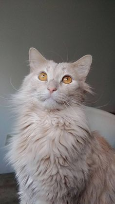 Mr Ratigan who wants the squirrels from outside the window so bad#dogs #kitty #lovecats #kittens #animals #ねこ #animal #kitten #cat #pets #ilovemycat #love #catoftheday #happynewyear #adorable #catlover #pet #meow #猫 #cute #pinterest