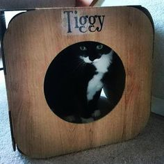 Awwww Tiggy is gorgeous!  yay! So glad she is in her pod  #cat #catsofinstagram #cats_of_instagram #catfurnature #catfurniture #catsinboxes #cattoy #INSTACAT_MEOWS #cutecat #PurrMachine #catsinboxes #catbox #Excellent_Cats #BestMeow #dailykittymail #thecatniptimes #catcube #catpod #ArchNemesis #FlyingArchNemesis #myindoorpaws #ififitsisits #cutecatcrew #catchalet #catnip #themeowdaily #kitty #catpyramid #pyramid