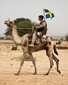 Swedish soldier riding camel in Afghanistan