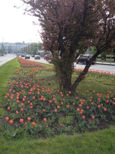 Spring & Tulips