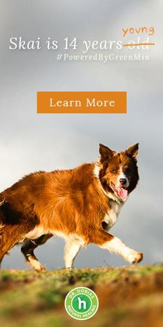 Common causes of green eye discharge in dogs can be treated without antibiotics Eye discharge is one of the problems...