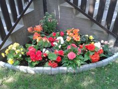 Begonia, Plants, Beautiful Roses, Gardening, Lawn And Garden, Plant, Planets, Horticulture