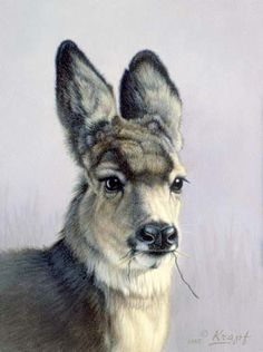 Fawn with ears back - Deer painting by Paul Krapf
