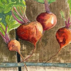 """PRINT of an Original Watercolor and Ink Painting """"Beets 2"""""""