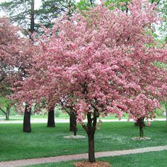 Selecting Trees for Your Yard