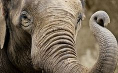 3 Zoo Elephants Who Need Us for an International Day of Action