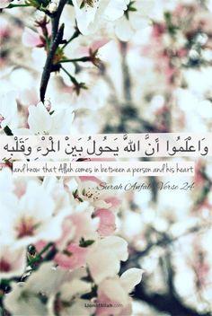 lionofallah: Allah comes between a person and his heart - Surah Anfal - www.lionofAllah.com
