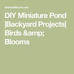 DIY Miniature Pond  Backyard Projects  Birds & Blooms