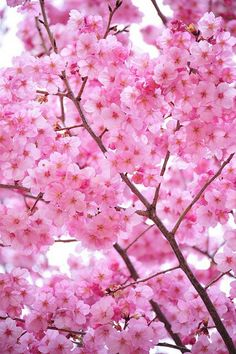 Cherry blossoms   Symbolizes: -end of difficult period in life  -new beginnings  -fragile/short time periods