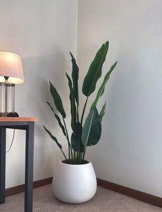 alohaboho Faux Potted Plant (Multiple Sizes) - 183cm (6 Feet)
