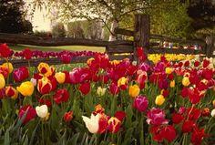 paisajes hermosos de flores para portada