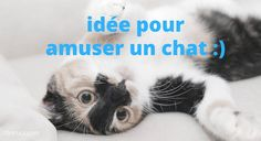 Son Chat, Cat Gif, Funny Photos, Cute Animals, Photo And Video, Pets, Education, Sweet, Cat Stuff