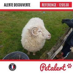 10.03.2018 / Mouton / Saint-Florent-des-BoisVendée / France