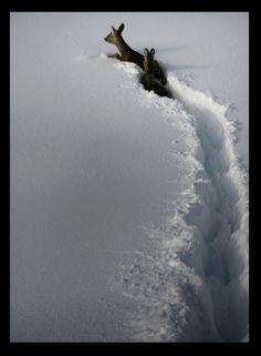 Deep snow.