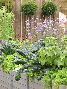 Edible Landscaping: Container Kitchen Garden | jardin potager | bauerngarten | köksträdgård
