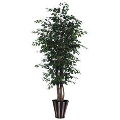 6' Ficus Executive / Silver / Black
