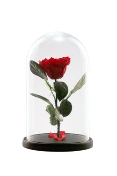 Asda, Gifts For Wife, Snow Globes, Beautiful Pictures, Home Decor, Decoration Home, Room Decor, Pretty Pictures, Home Interior Design