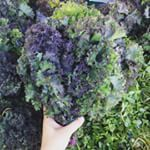 Purple Kale over at the Monterey Park Certified Farmers Market where prices are super reasonable for produce and organics  #organic #farmersmarket #svg #montereypark