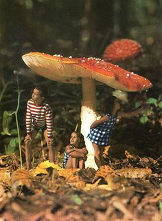 Gunnel Linde - The Enchanted Forest; it would be so cute to Photoshop your girl in a fairy costume under a toadstool. Photomontage, Collages, Collage Art, Arte Punk, Photoshop, Foto Art, Psychedelic Art, Surreal Art, Surreal Collage